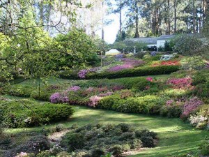 RhododendronGardens600X450