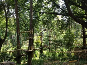 TreesAdventure600X450
