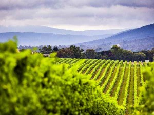 yarra-valley-vineyard_yvdr_r_supplied_600X450